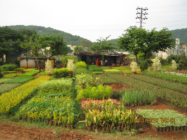 Shreeji Properties' Forest View Bungalows at Somatane PhataIMG_3144