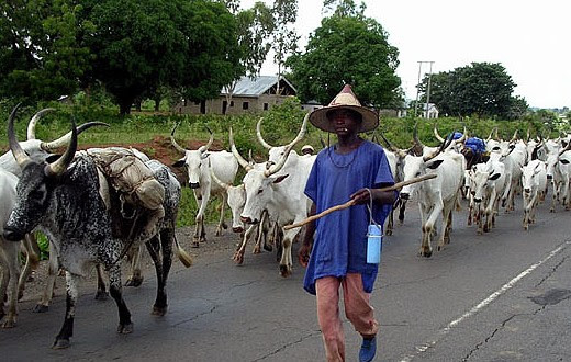 Shun Negative Conducts, Adamu Tells Herdsmen In Imo
