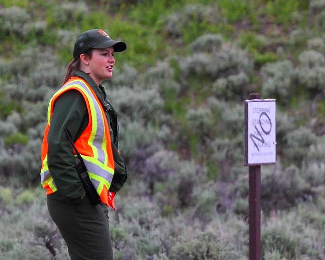 IMG_3299 Ranger Regulating a Bear Jam, Yellowstone National Park