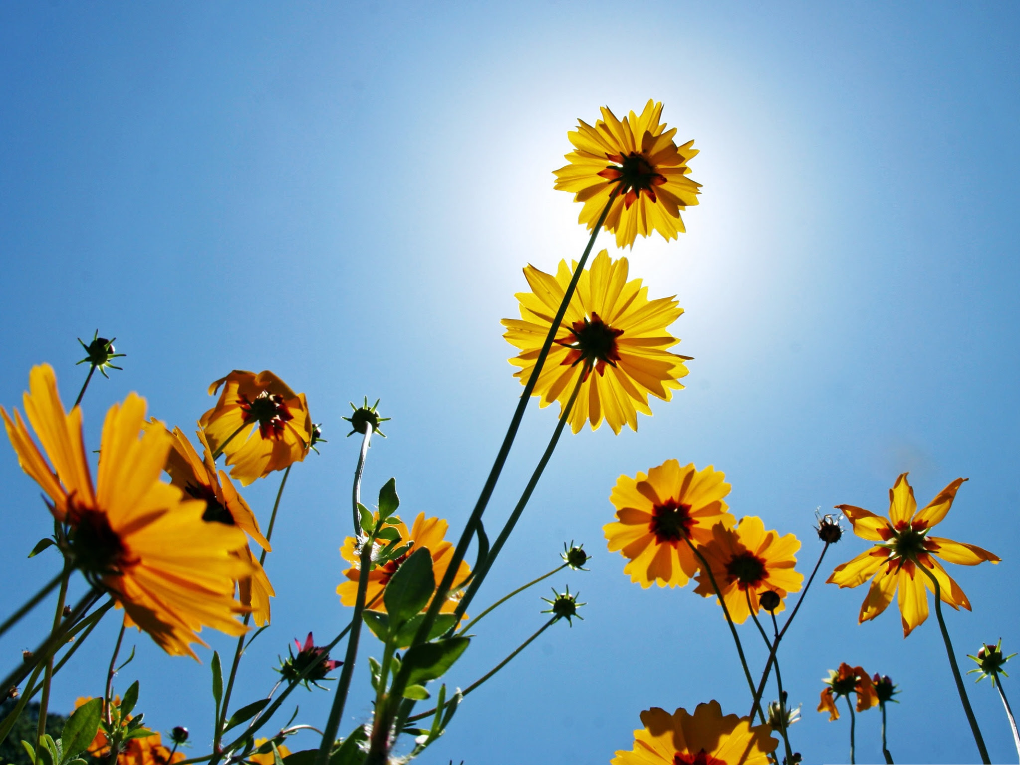 http://74211.com/wallpaper/picture_big/Yellow-Flowers-Picture-Blooming-Little-Flower-Under-the-Blue-Sky-Amazing-Scenery.jpg