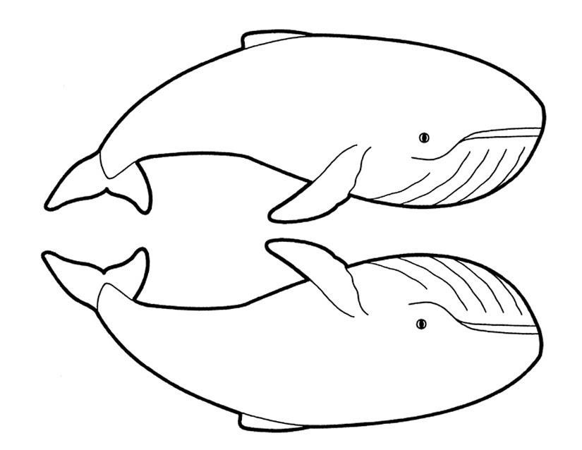 247 Dessins De Coloriage Baleine à Imprimer Sur Laguerchecom Page 1