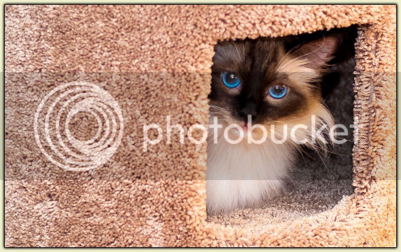 Peek-a-Boo Stella