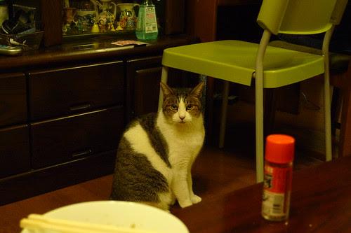Maiko's cat, Oliver