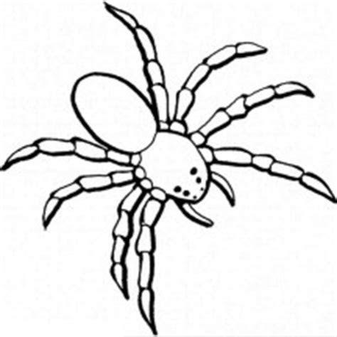 spider netart