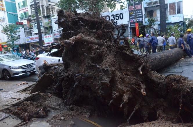 Hiện trường một vụ cây ngã trên đường An Dương Vương, quận 5 khiến một người chết. (Hình: Tuổi Trẻ)