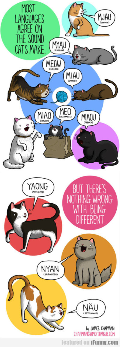 Most Languages Agree On The Sounds Cats Make