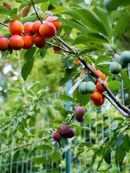 frutos en el verano