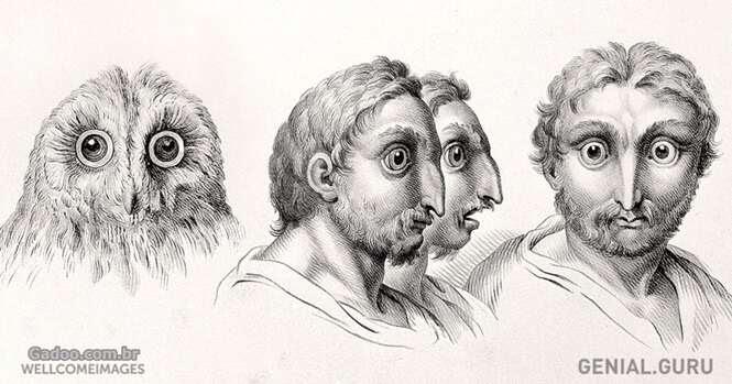 Como os seres humanos seriam se tivessem evoluído de outros animais