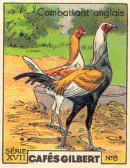 gilbert poules 8