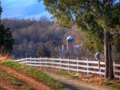 The Cedar, the Fence, and the Farm