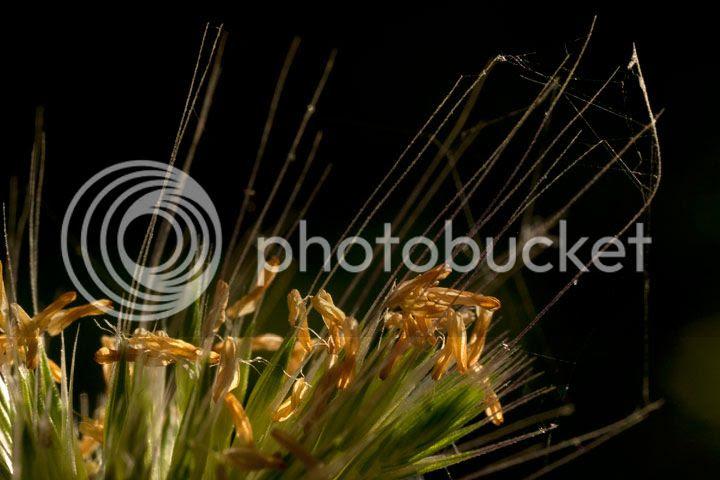 photo _Planta_zps5d9cef62.jpg