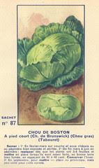 legume87 chou