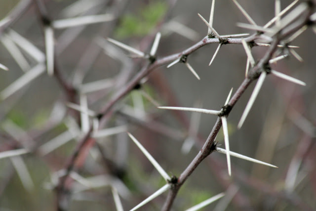 Spines upclose