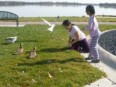 Feeding Ducks and Gulls