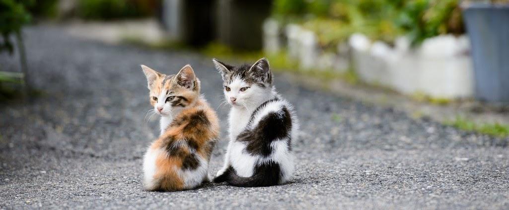 Nama Kucing Yang Keren Dan Lucu 81021 Nama Untuk Kucing Comel Lucu Dan Unik