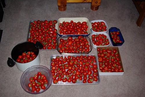 2009-08-31 Making Sauce (5)