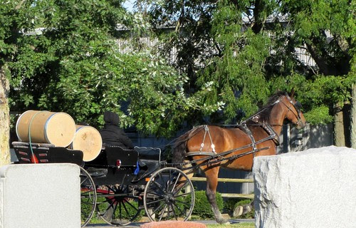 IMG_021_Amish_Buggy_with_Barrels