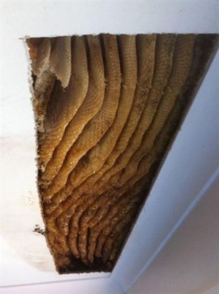 Disturbing Ceiling Surprise