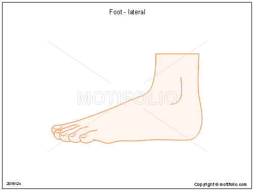 Foot - lateral Illustrations