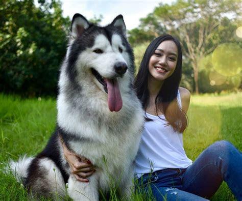 gemas  artis  rame rame foto bareng anjing alaska