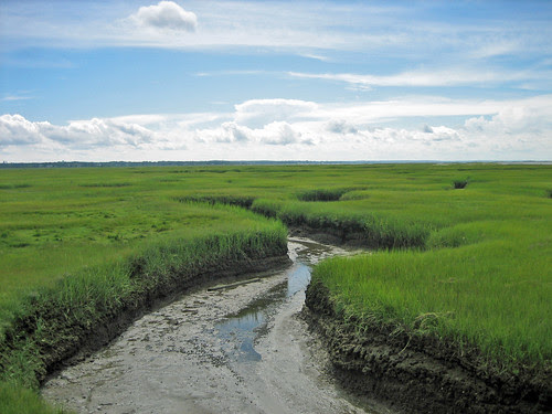 Tidal marsh, Chapin Beach