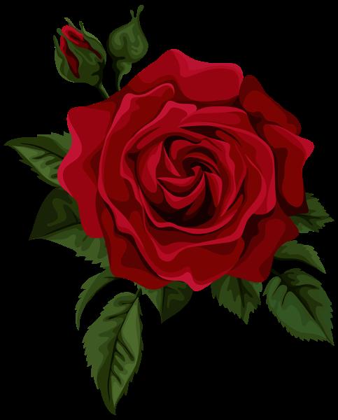 Terbaru 30 Bunga Mawar Png Gambar Bunga
