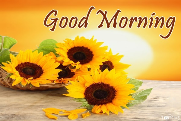 Good Morning Sms Quotes Wishes Messages Images For Facebook