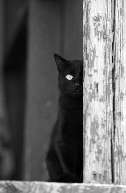 cat, Darkness, horror, black and white, black cat, varnuak, gothic, creepy