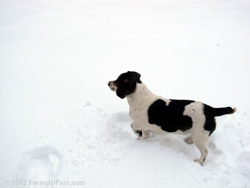 Snow dogs 2 - FarmgirlFare.com