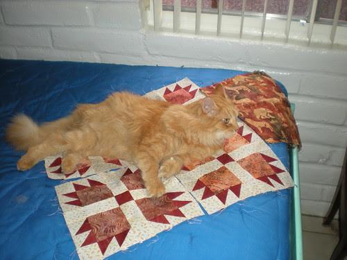 Cat and quilt