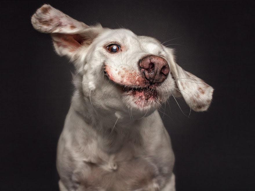 fotos-perros-expresiones-faciales-comida-christian-vieler-2 (4)