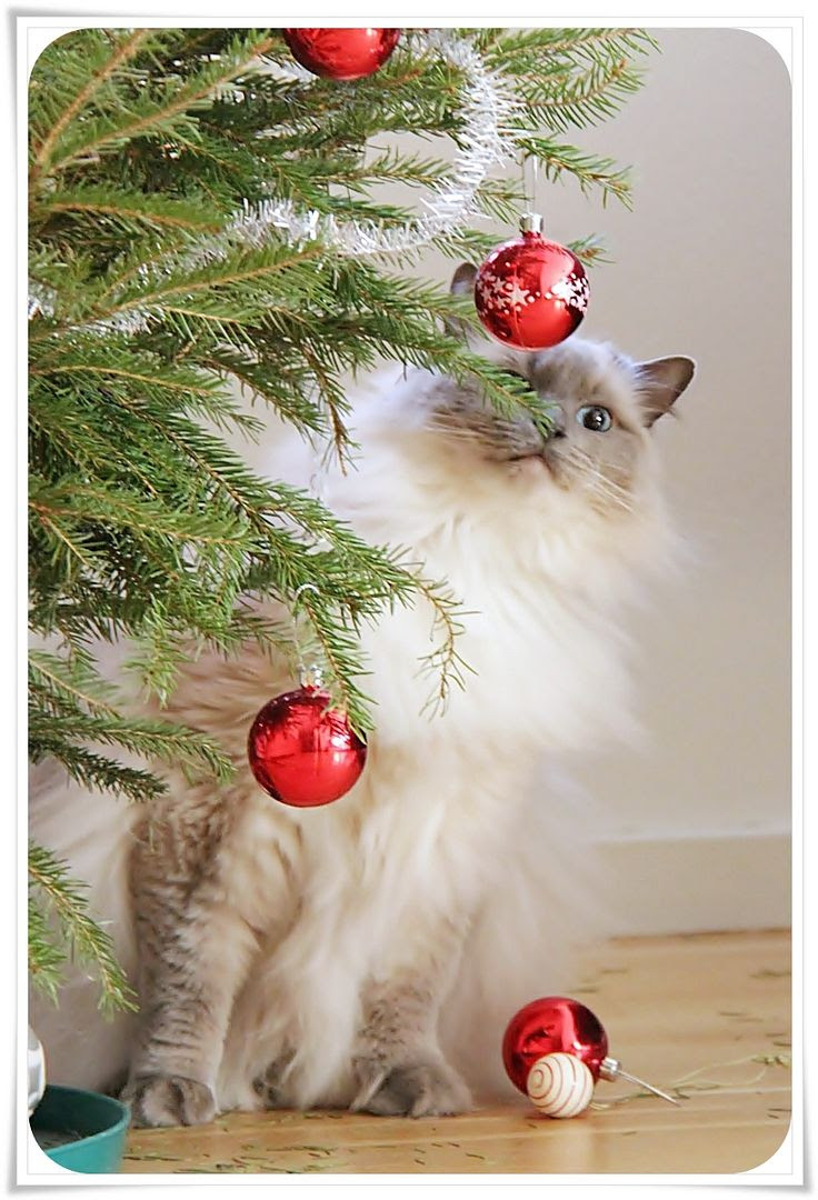 1.9, Our cat Saga was nice enough to help me take the decorations down..!