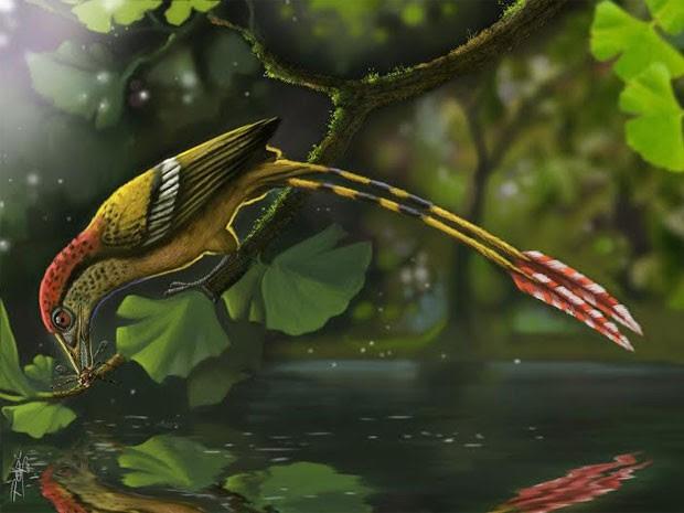 Representação artística mostra como seria a ave fossilizada encontrada no Brasil (Foto: Deverson Pepi/Nature Communications)