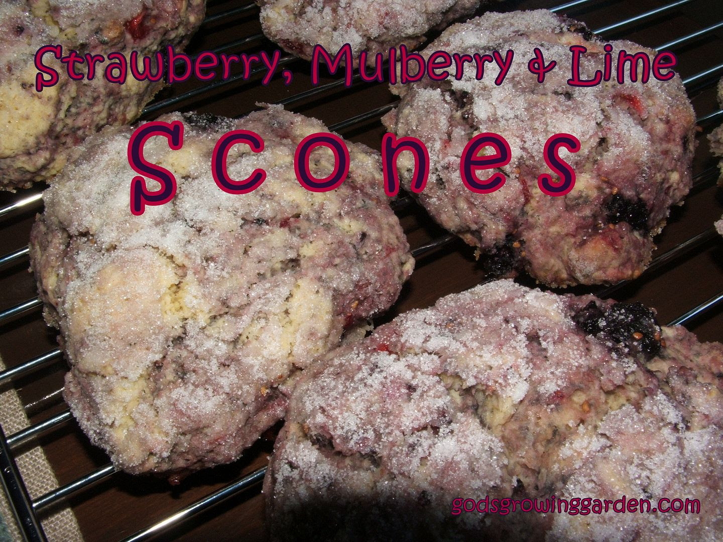 Mulberry Scones by Angie Ouellette-Tower for godsgrowinggarden.com photo 010_zpsb02e97b1.jpg