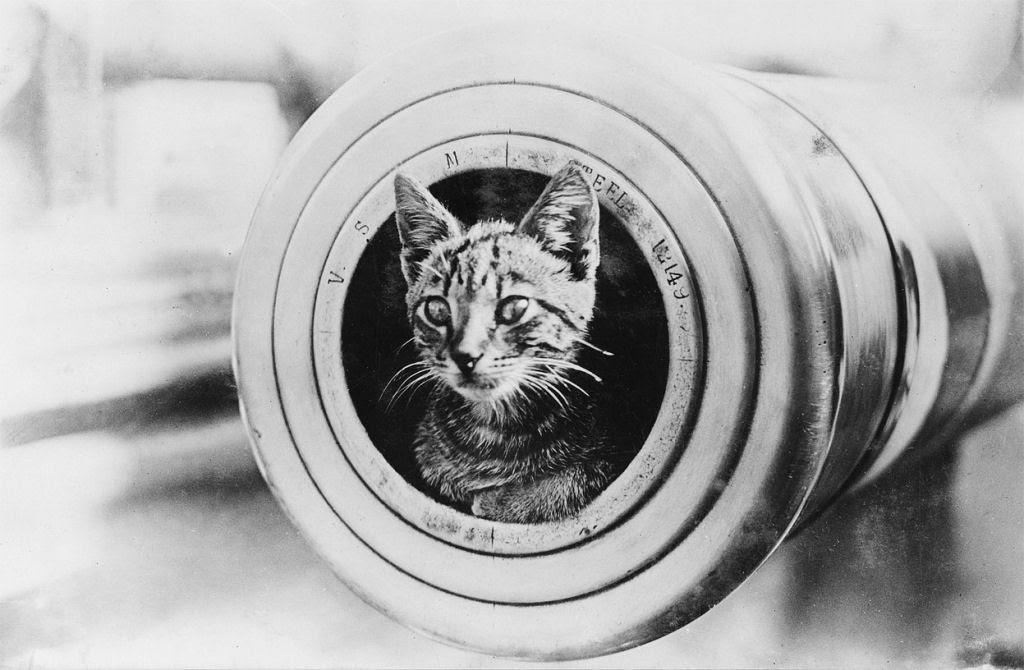 Os animais também lutaram na Primeira Guerra Mundial 20