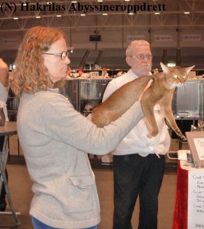 Kate med Valentino til utvelgelse av NOM (dommerens beste fertile hannkatt) til panelet :)