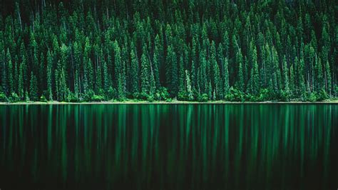 green pine tree forest  wallpapers hd wallpapers id