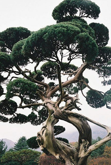 trees, 22