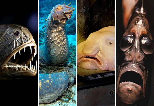 criaturas-mais-feias-e-bizarras_pepino-do-mar