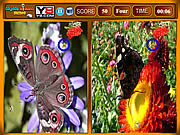 Jogar Butterfly similarities game Jogos