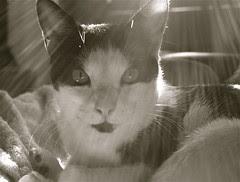 Abby soaking up the rays