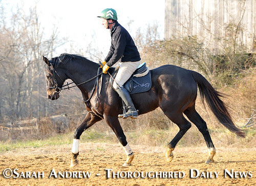 Declan's Moon: Retired Racehorse Training Project 100-Day Thoroughbred Challenge