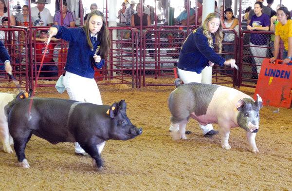 RGV Livestock Show - Rio Grande Valley FFA