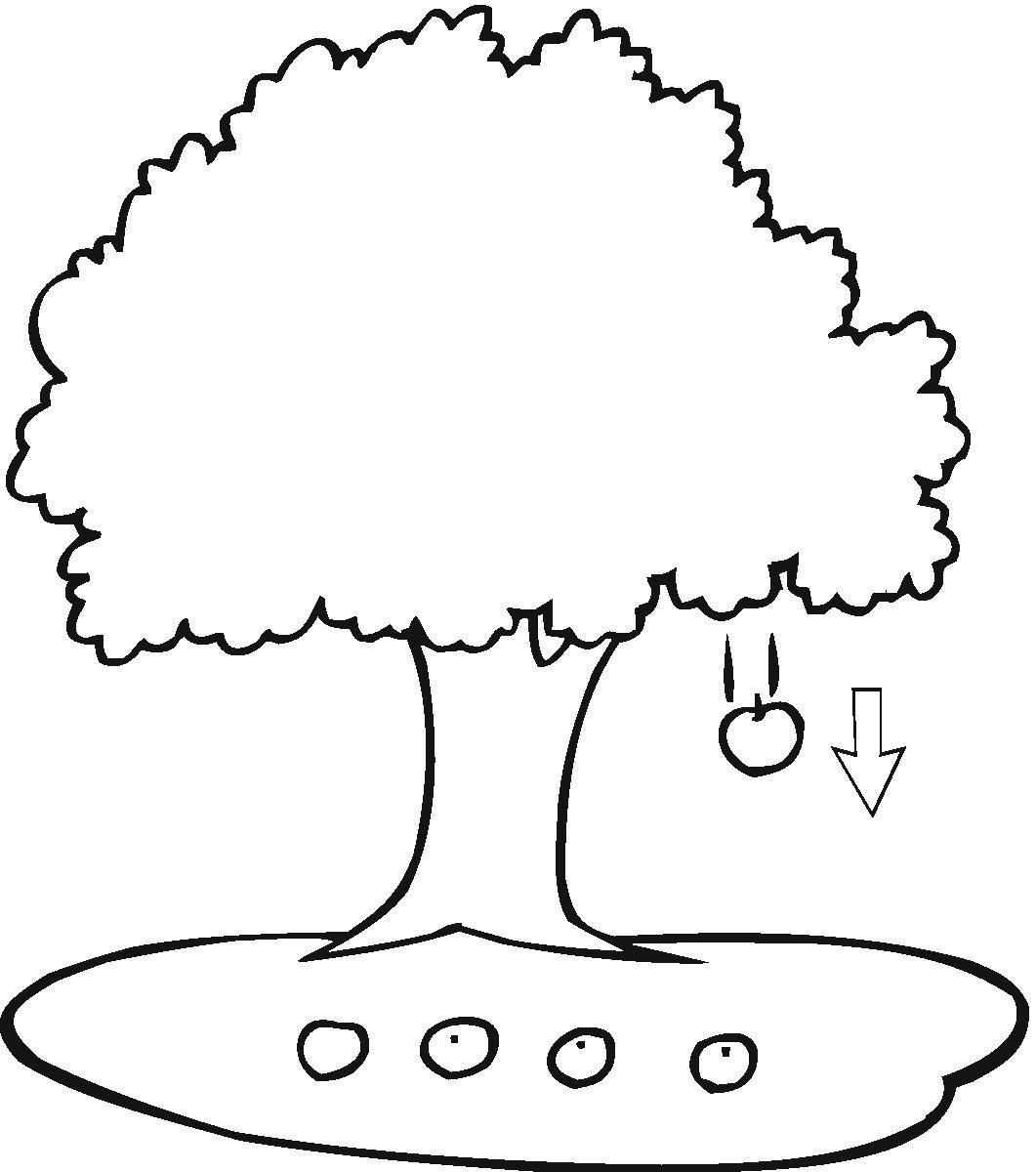 Apple Tree Coloring Pagesjpg Sınıf öğretmenleri Için ücretsiz