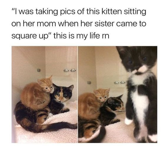 20 Adorable Kitten Memes To Cheer Up Your Day