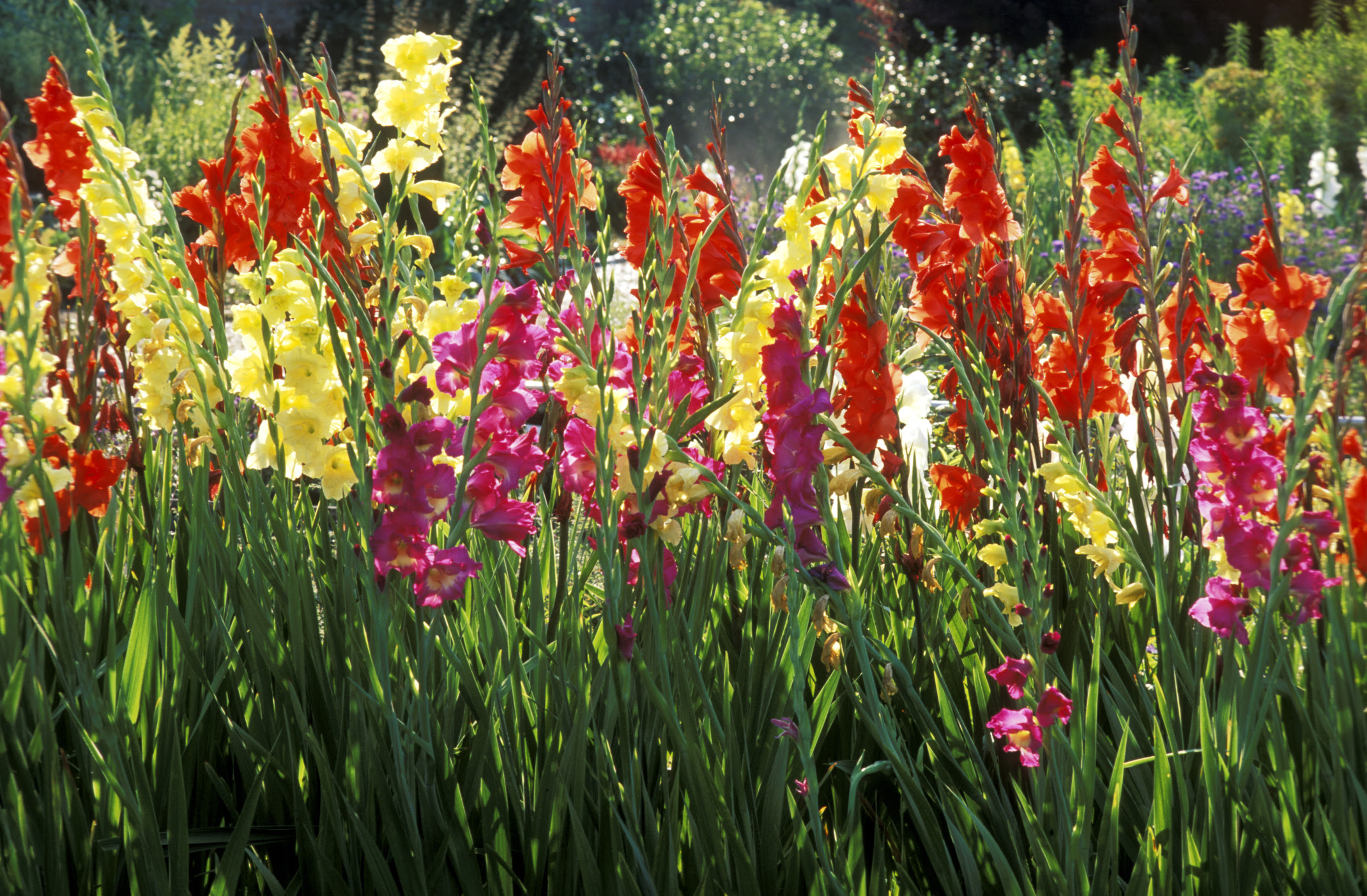 Bildergebnis für beautiful flowers in August
