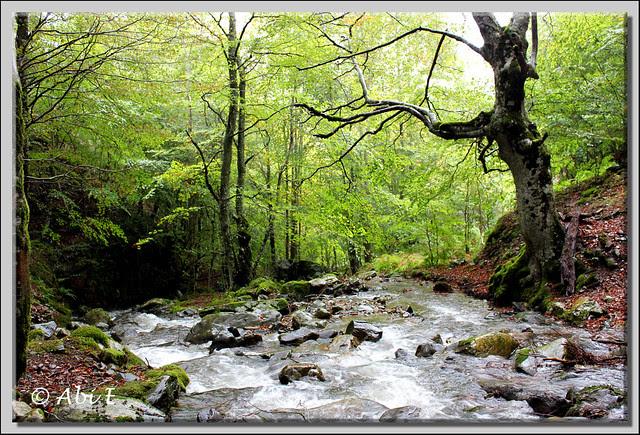 5 río Urbión