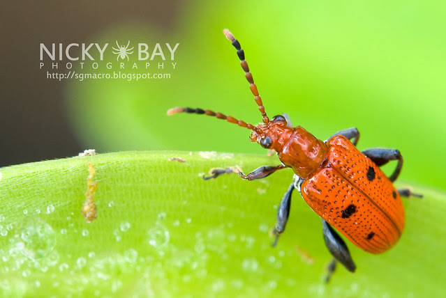 Beetle - DSC_8125