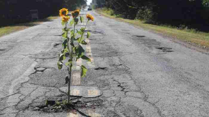 Κάτοικοι φυτεύουν λουλούδια στις λακκούβες των δρόμων!