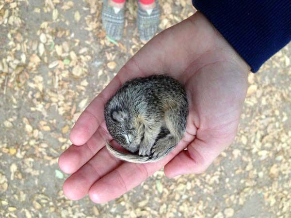 This baby squirrel was rescued after being found freezing out in the cold.